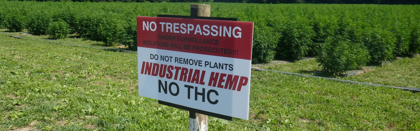 5 Must-Know Tips for Hemp Theft Prevention