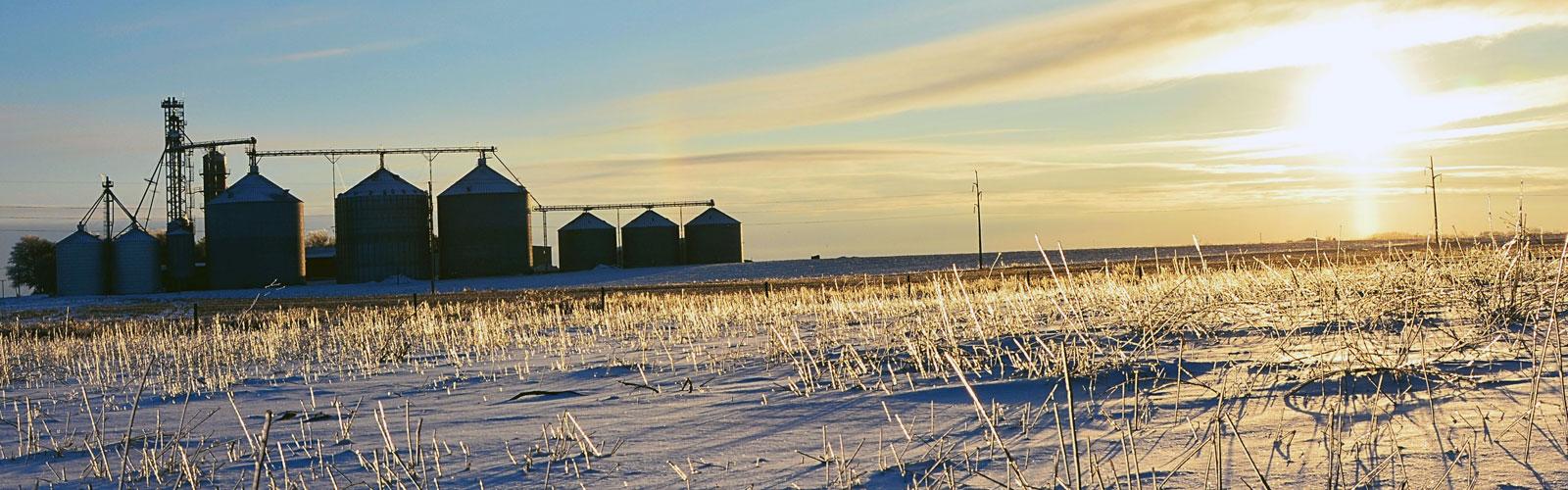 Winter Comes Early, Sweeping Destruction Through Colorado Hemp Farms